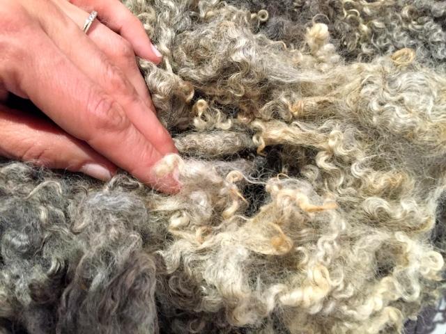 Wools of Europe - Les prairies du 5ème étage